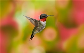Hummingbird flight, wings, blurry background