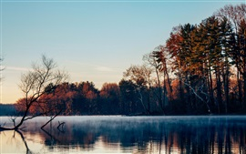 Lake, trees, fog, autumn, morning
