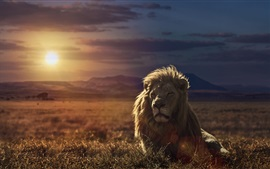 Preview wallpaper Lion at sunset