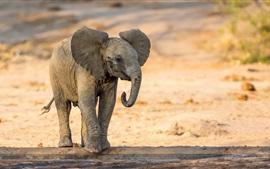 Pequeño elefante caminando