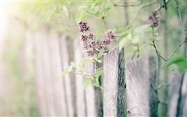 Little purple flowers, tree, fence, bokeh