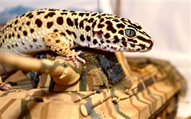 Preview wallpaper Lizard, spot, toy tank