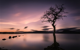 Preview wallpaper Lonely tree, lake, mountains, sunset