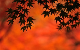 Кленовые листья, осень, сумерки