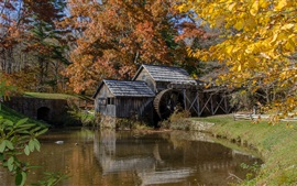 Mill, river, trees, autumn