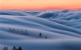 Mañana, niebla, árboles, cielo