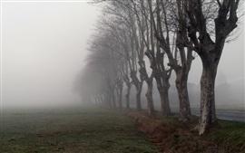 Mañana, niebla, árboles