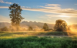 Morning, grass, trees, fog, river, clouds, sunrise