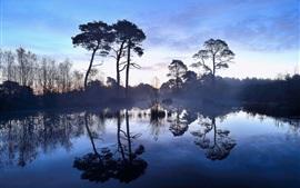 Mañana, árboles, lago, reflejo del agua, niebla