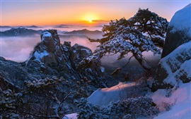 Preview wallpaper Mountain top, snow, trees, sunrise, winter