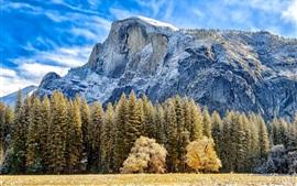 Montanha, árvores, grama, outono