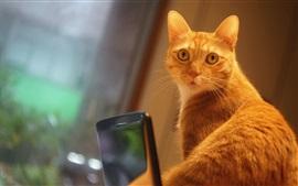 Orange cat look back, bokeh