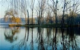 Park, trees, lake