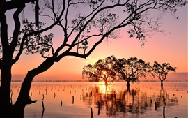 Филиппины, Минданао, деревья, закат, море