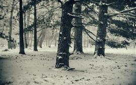 松の木、雪、冬、寒い