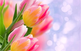 Preview wallpaper Pink tulips, flowers, bokeh, glare
