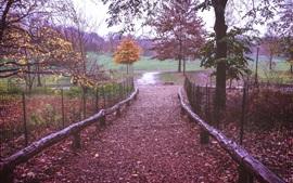 Prospeto, parque, nova iorque, caminho, cerca, folhas, árvores, outono, eua
