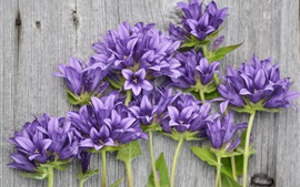 Preview wallpaper Purple flowers, wood background