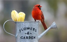 Preview wallpaper Red cardinal bird, kettle, yellow tulips