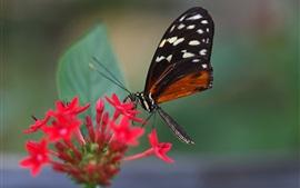Красные цветы, бабочка, насекомое