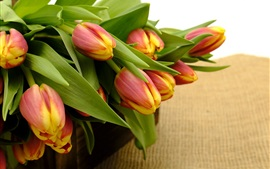Red-orange tulips, green leaves