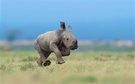 Preview wallpaper Rhino cub running in the grass