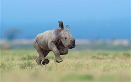 Aperçu fond d'écran Rhino cub courir dans l'herbe
