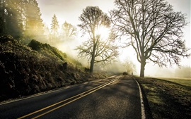 Preview wallpaper Road, car, trees, sun rays, morning