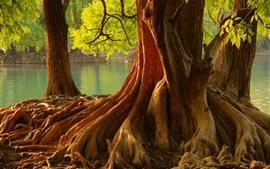 Raízes, árvores, rio