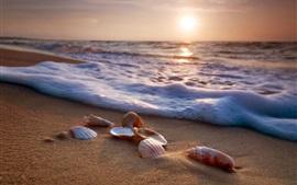 壁紙のプレビュー 海、浜、貝殻、波、泡