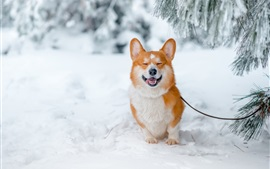 Preview wallpaper Smile dog, snow, winter