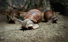 Preview wallpaper Snails walk on ground, insect
