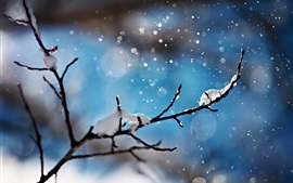 Preview wallpaper Snowy, winter, snowflakes, twigs, blue background