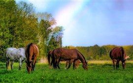 Preview wallpaper Some horses, meadow, grazing