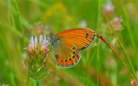 Spring, butterfly, flower, bokeh