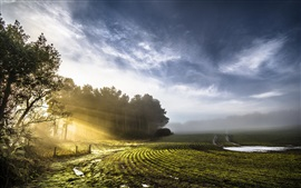 Spring, fields, trees, sun rays, morning