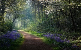 Spring, forest, flowers, path