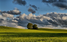 Spring, wheat fields, trees, clouds