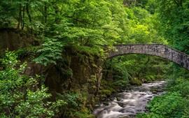 Ponte de pedra, riacho, árvores, verde, floresta
