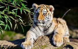 Preview wallpaper Tiger cub, sunshine