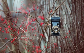 Preview wallpaper Tree, red berries, camera