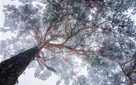 Дерево, снег, зима, вид снизу