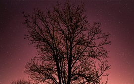 Tree, starry, sky, night
