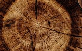 Tronco de árvore, coto, textura