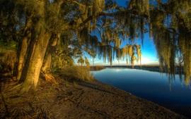 Árvore, galhos, rio, manhã
