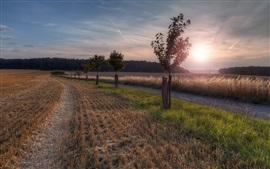 Trees, fields, grass, sunset
