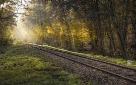 Деревья, лес, железная дорога, солнце