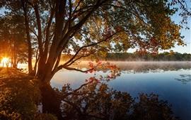 Árboles, lago, niebla, mañana, sol