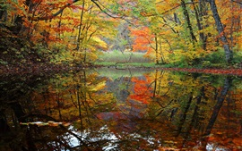 Preview wallpaper Trees, pond, autumn