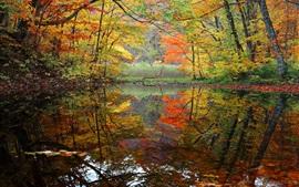 Árboles, estanque, otoño